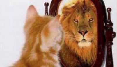 kat-ziet-leeuw-in-spiegel